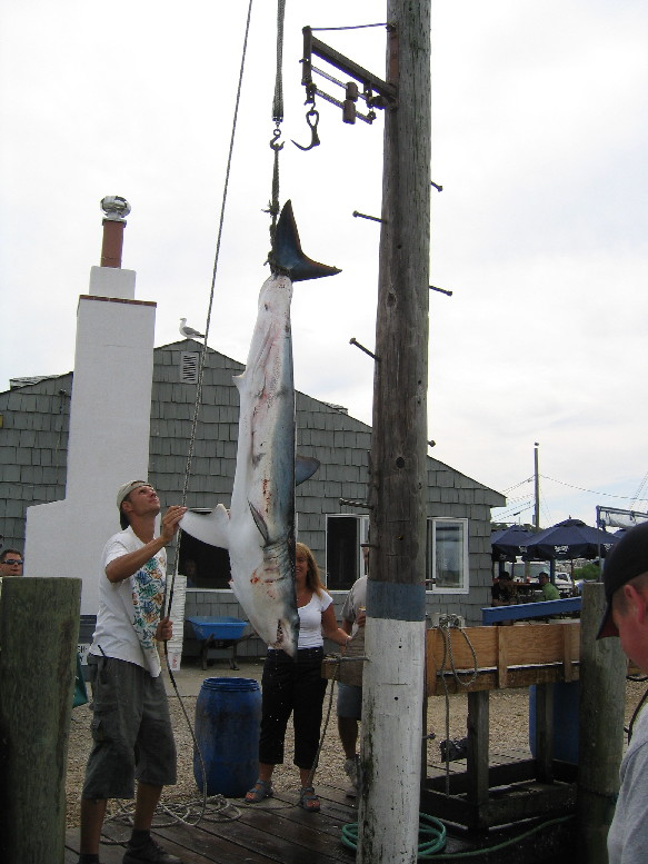 Montauk Sport Fishing